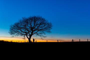 oak tree with a standing person on a winter sunset : Stock Photo or Stock Video Download rcfotostock photos, images and assets rcfotostock | RC-Photo-Stock.: