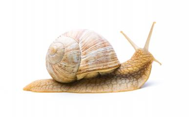 offended old snail- Stock Photo or Stock Video of rcfotostock | RC-Photo-Stock