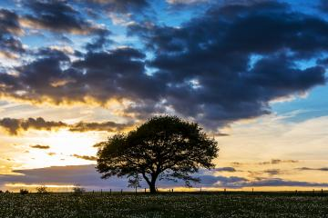 old oak tree on meadow at sunset blue hour with cloudy Sky in the Eifel national park germany- Stock Photo or Stock Video of rcfotostock | RC-Photo-Stock