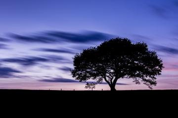 old oak tree silhouette at colorful sunset blue hour with cloudy Sky in the Eifel national park germany : Stock Photo or Stock Video Download rcfotostock photos, images and assets rcfotostock | RC-Photo-Stock.:
