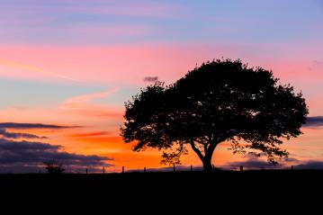 Old oak tree silhouette on a hill at a colorful sunset blue hour in summer in the eifel : Stock Photo or Stock Video Download rcfotostock photos, images and assets rcfotostock | RC-Photo-Stock.: