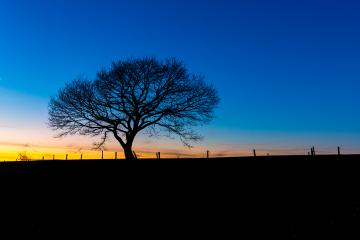 old oak tree sunset silhouette : Stock Photo or Stock Video Download rcfotostock photos, images and assets rcfotostock | RC-Photo-Stock.: