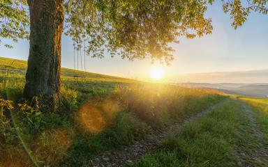 old oak tree with empty swing at sunset : Stock Photo or Stock Video Download rcfotostock photos, images and assets rcfotostock | RC-Photo-Stock.:
