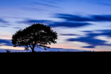 Old single Tree on a hill at sunset blue hour with colorful cloudy sky : Stock Photo or Stock Video Download rcfotostock photos, images and assets rcfotostock | RC-Photo-Stock.: