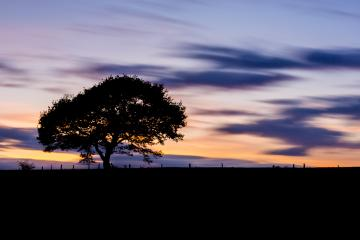 Old single Tree on a hill at sunset blue hour with colorful orange cloudy sky- Stock Photo or Stock Video of rcfotostock | RC-Photo-Stock