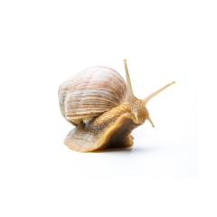 old snail : Stock Photo or Stock Video Download rcfotostock photos, images and assets rcfotostock | RC-Photo-Stock.: