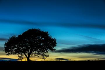 old tree silhouette at colorful sunset blue hour with cloudy Sky in summer- Stock Photo or Stock Video of rcfotostock | RC-Photo-Stock