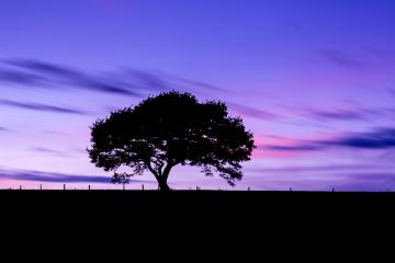 Old tree silhouette on a hill at a colorful sunset in spring at the Eifel national park germany : Stock Photo or Stock Video Download rcfotostock photos, images and assets rcfotostock | RC-Photo-Stock.: