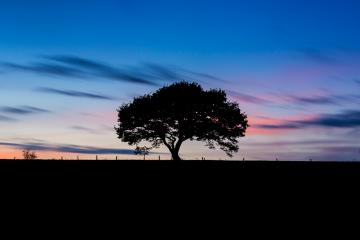 Old tree silhouette on a hill at a colorful sunset in spring at the Eifel germany : Stock Photo or Stock Video Download rcfotostock photos, images and assets rcfotostock | RC-Photo-Stock.: