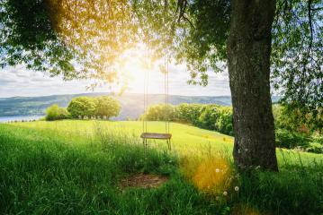 Old wooden vintage swing hanging from a large tree on green grass background, in golden evening sunlight : Stock Photo or Stock Video Download rcfotostock photos, images and assets rcfotostock | RC-Photo-Stock.: