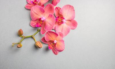 Orchids flowers in branch on gray background- Stock Photo or Stock Video of rcfotostock | RC-Photo-Stock