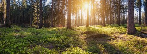 Panorama landscape of a forest at sunset : Stock Photo or Stock Video Download rcfotostock photos, images and assets rcfotostock | RC-Photo-Stock.: