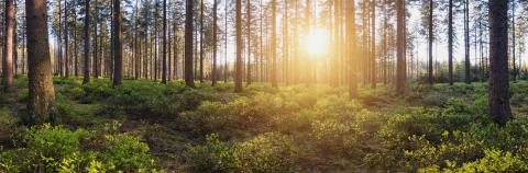 Panorama landscape of forest with sun rays- Stock Photo or Stock Video of rcfotostock | RC-Photo-Stock
