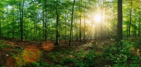 Panorama of a beautiful forest at sunrise - Stock Photo or Stock Video of rcfotostock | RC-Photo-Stock