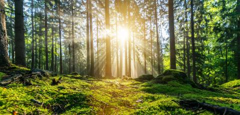Panorama of a beautiful forest at sunrise : Stock Photo or Stock Video Download rcfotostock photos, images and assets rcfotostock | RC-Photo-Stock.: