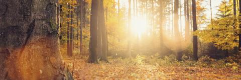 panorama of a gorgeous forest in autumn, a scenic landscape with warm sunlight : Stock Photo or Stock Video Download rcfotostock photos, images and assets rcfotostock | RC-Photo-Stock.: