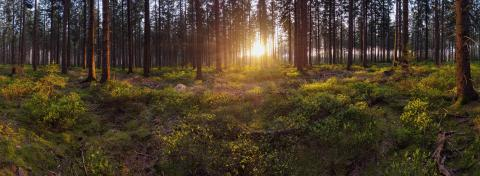 Panorama of a scenic forest with the sun rays casting the light - Stock Photo or Stock Video of rcfotostock | RC-Photo-Stock