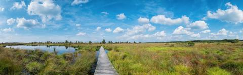 Panoramic view of the high Venn (Hautes fagnes) a bog landscape at the Eifel in belgium at summer : Stock Photo or Stock Video Download rcfotostock photos, images and assets rcfotostock | RC-Photo-Stock.: