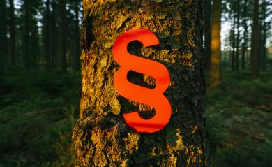 paragraph sign of Law and Justice on a tree trunk at the deep forest at sunset- Stock Photo or Stock Video of rcfotostock | RC-Photo-Stock