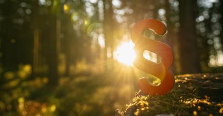 paragraph symbol of Law and Justice in to the deep forest sun on a tree trunk, copyspace for your individual text.- Stock Photo or Stock Video of rcfotostock | RC-Photo-Stock