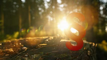 paragraph symbol of Law and Justice in to the forest sun on a tree trunk, copyspace for your individual text.- Stock Photo or Stock Video of rcfotostock | RC-Photo-Stock