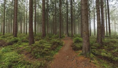Path in a forest covered with mist : Stock Photo or Stock Video Download rcfotostock photos, images and assets rcfotostock | RC-Photo-Stock.:
