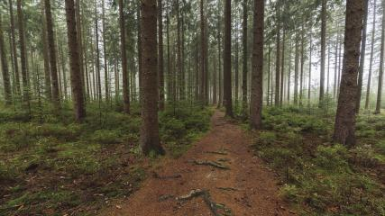 Path in to the forest at autumn with mist- Stock Photo or Stock Video of rcfotostock | RC-Photo-Stock