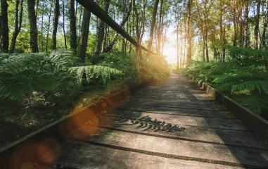 path in to the forest covered ferns and sunlight, at summer evening  : Stock Photo or Stock Video Download rcfotostock photos, images and assets rcfotostock | RC-Photo-Stock.:
