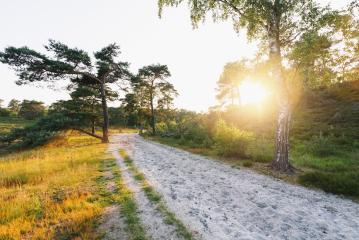 path in to the sunrise heather landscape with sun rays shining through a tree. brunssummerheide  : Stock Photo or Stock Video Download rcfotostock photos, images and assets rcfotostock | RC-Photo-Stock.: