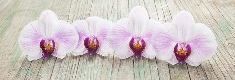 Phalaenopsis orchid flowers in a row on wooden background- Stock Photo or Stock Video of rcfotostock | RC-Photo-Stock