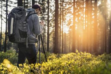 Photographer takes a picture in Silent Forest in spring with beautiful bright sun rays- Stock Photo or Stock Video of rcfotostock | RC-Photo-Stock