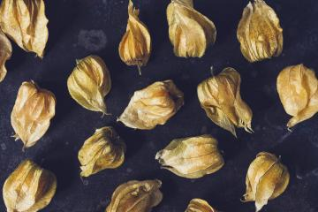 Physalis fruit (Physalis Peruviana) on dark background- Stock Photo or Stock Video of rcfotostock | RC-Photo-Stock