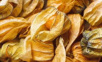 Physalis fruits ( Physalis peruviana). Golden berry, Cape gooseberry. : Stock Photo or Stock Video Download rcfotostock photos, images and assets rcfotostock | RC-Photo-Stock.: