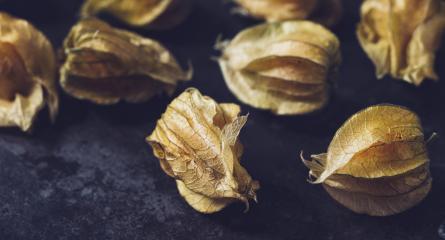 Physalis fruits (Physalis Peruviana) on dark background- Stock Photo or Stock Video of rcfotostock | RC-Photo-Stock