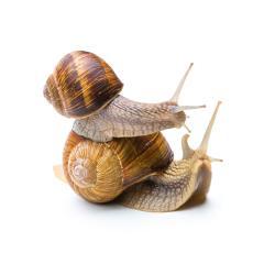 piggyback snail  : Stock Photo or Stock Video Download rcfotostock photos, images and assets rcfotostock | RC-Photo-Stock.: