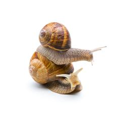 Piggybacking a Snail- Stock Photo or Stock Video of rcfotostock | RC-Photo-Stock