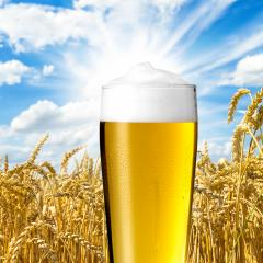 Pilsener bier mit tautropfen : Stock Photo or Stock Video Download rcfotostock photos, images and assets rcfotostock | RC-Photo-Stock.: