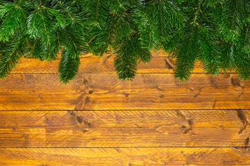 pine branches on wood- Stock Photo or Stock Video of rcfotostock | RC-Photo-Stock