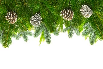 pine branches with pine cones - Stock Photo or Stock Video of rcfotostock | RC-Photo-Stock