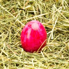 pink easter egg on hay- Stock Photo or Stock Video of rcfotostock | RC-Photo-Stock
