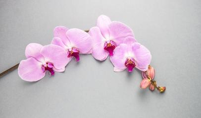 Pink orchid on gray background- Stock Photo or Stock Video of rcfotostock | RC-Photo-Stock