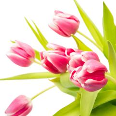 pink tulip flowers bouquet- Stock Photo or Stock Video of rcfotostock | RC-Photo-Stock