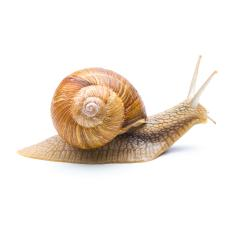 Protection from snails in the garden : Stock Photo or Stock Video Download rcfotostock photos, images and assets rcfotostock | RC-Photo-Stock.: