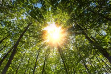 Rays of sunlight falling through the forest- Stock Photo or Stock Video of rcfotostock | RC-Photo-Stock
