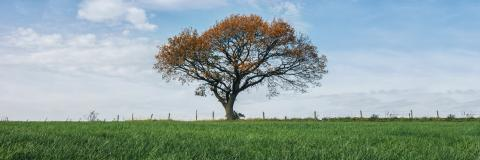 red autumn oak tree on a field  : Stock Photo or Stock Video Download rcfotostock photos, images and assets rcfotostock | RC-Photo-Stock.: