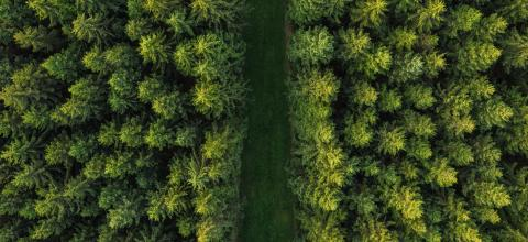 Road in the forest aerial view - Stock Photo or Stock Video of rcfotostock | RC-Photo-Stock