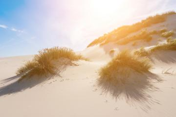 sand dunes at the North sea coast- Stock Photo or Stock Video of rcfotostock | RC-Photo-Stock