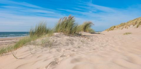 sand dunes on North sea coast, Holland- Stock Photo or Stock Video of rcfotostock | RC-Photo-Stock