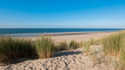 sand dunes with ocean view in Renesse, Holland- Stock Photo or Stock Video of rcfotostock | RC-Photo-Stock