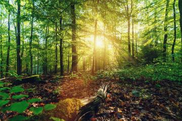 Scenic forest of fresh green deciduous trees framed by leaves, with the sun casting its warm rays through the foliage  - Stock Photo or Stock Video of rcfotostock | RC-Photo-Stock